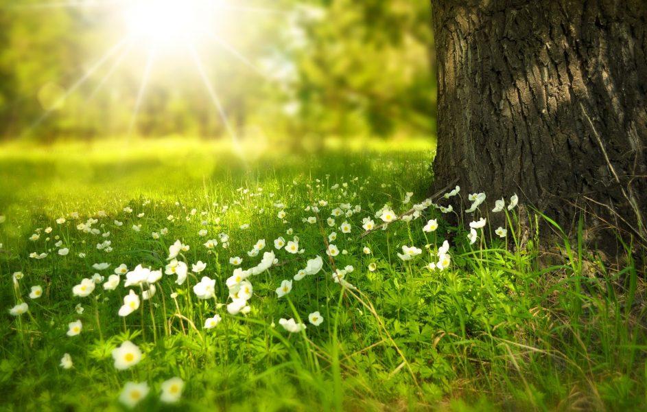 7 sevärdheter med vacker natur i Sverige